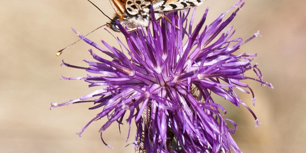 Papillon sur une fleur / Michel CASTILLO-CD66