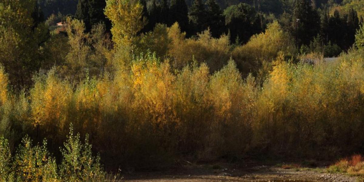 Vue de la vallée de la Tet / Michel CASTILLO-CD66