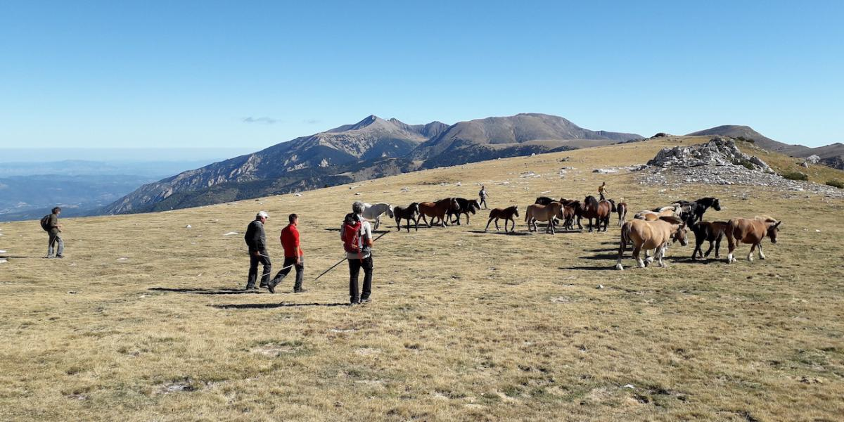 Troupeau de chevaux en estive / SMCGS