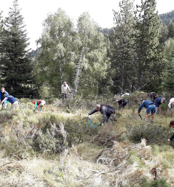 Débroussaillage à Py avec la réserve et le groupement pastoral de la Rotjà / SMCGS