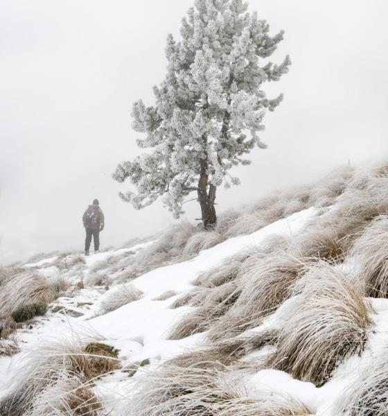 Randonnée hivernale / Michel CASTILLO-CD66